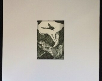 Original Pen and Ink ACEO Calla Lily Flower Art Card - Unfurl