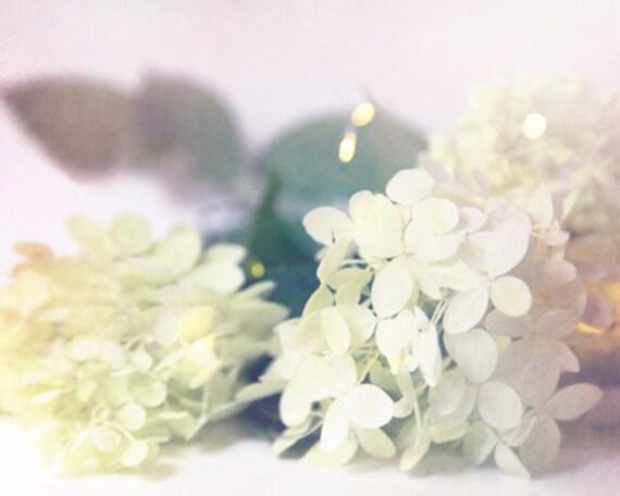 White hydrangea photo french country decor country decor etsy image 0 mightylinksfo