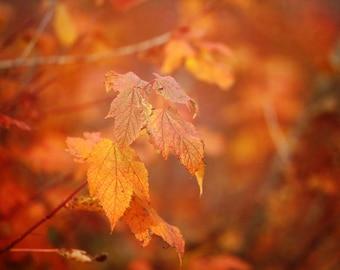Fall Photograph, Autumn Leaves Photo, Autumn Wall Art, Fall Colors Canvas Art