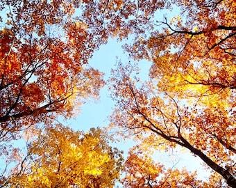 Autumn Photography, Fall Tree Canopy Photo, Fall Foliage Art, Autumn Trees Canvas Art