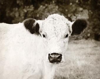 Cow Photo, Cow Print, Farmhouse Decor, Cow Photograph, Farm Animal Photo, Cow Canvas Art, Farm Animal Print, Country Home Decor