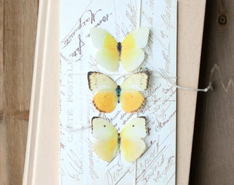 collection no. 32 yellow silk butterflies number 152, 153, 159 . hair clips, pins, magnets . realistic gifts wedding, bridesmaids, sweet 16