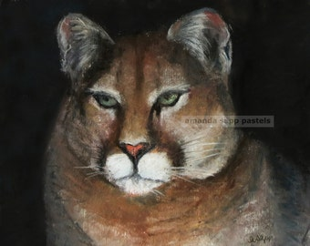 ad9f94d9d0eb Cougar pastel painting print of original pastel painting-wildlife  painting-wildlife art-amanda sapp-wildcat painting-puma-mountain lion