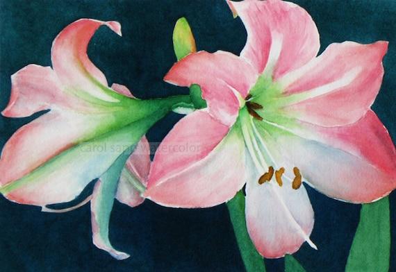 Amaryllis Watercolor Amaryllis Painting Pink Amaryllis Flower Etsy
