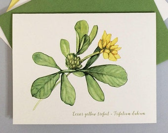 Botanical art note card. Wildflower notecard with natural history facts about yellow trefoil. Blank inside for Mother's Day or any occasion.
