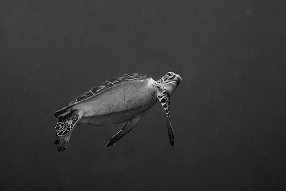 Sea Turtle Decor Black & White Underwater Photography print