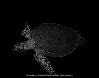 Sea Turtle Art Underwater Photography print of Sea Turtle in Black and White