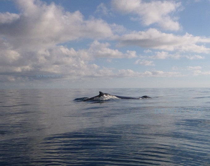 Hump Back Whale Photograph - Downloadable Print  Los Cabos Whale Watching - Create Framed Art Canvas Art - Digital Photo Gift Idea
