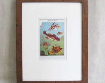 Vintage Fish Art Wall Decor, Framed Fish Book Plate, Ocean Life, Science Illustration