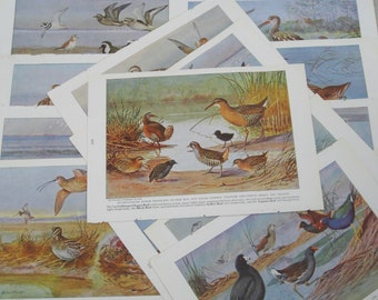Vintage Bookplate Collection, Shore Birds, Water Fowl, Wildlife, Art Supplies, Collage, Group