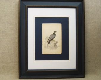 Vintage Bird Bookplate, Pigeon, Framed, Rare Engravings, Hand Colored, Samuel Highley, 19th Century, W.H. Lizars, Naturalist Library