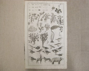 Antique Engraving, Plants, Birds and Beast of Spitzbergen, 18th Century Bookplate