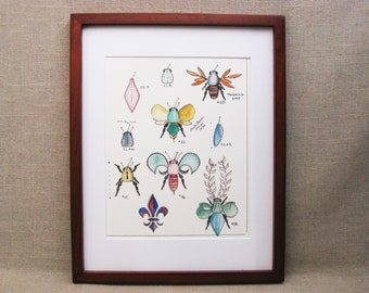 Insect Watercolor Painting, Specimen Illustration, Bugs, Framed Original Fine Art