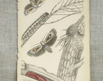 Antique Flying Insect Bookplate, Hand Colored Illustration, Moths, Samuel Highley, 19th Century, W.H. Lizars, Naturalist Library, Rare