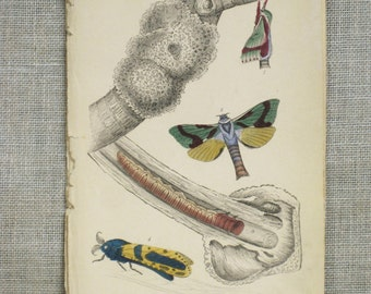 Antique Hand Colored Insect Bookplate, Moths, Caterpillars, Samuel Highley, 19th Century, W.H. Lizars,Naturalist Library,Rare,Paper Ephemera