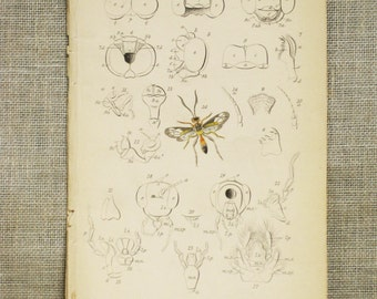 Antique Bookplate , Hand Colored , Wasp , Insects , Samuel Highley , 19th Century , W.H. Lizars , Bees , Naturalist Library , Bee , Rare