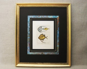 Vintage Fish Print Wall Decor, Framed Hand Colored Fine Art Print
