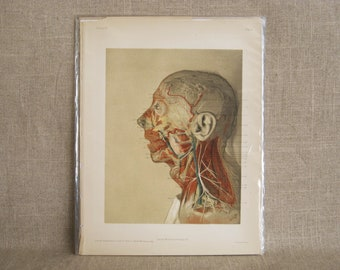 Vintage Male Portrait McClellan Anatomical Book Plate, Medical Illustration Science Collectible