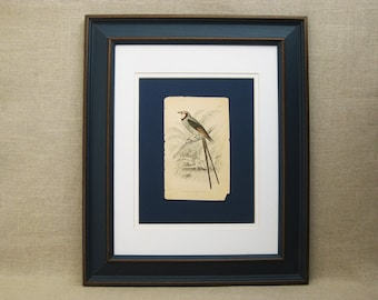Vintage Bird Bookplate, Framed, Rare Engravings, Hand Colored, Samuel Highley, 19th Century, W.H. Lizars, Naturalist Library