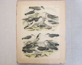 Antique Bird Engraving, Vintage Hand Colored Sea Birds and Water Fowl Bookplate, Theodore Jasper