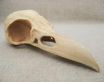 Vintage Bird Skull Carving, Folk Art Carving, Ray Kobald