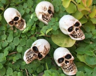 Miniature Skulls, Packaged Set of 5 Pieces, Fairy Garden Accessory, Miniature Gardening, Home and Garden Decor, Halloween Deco, Topper