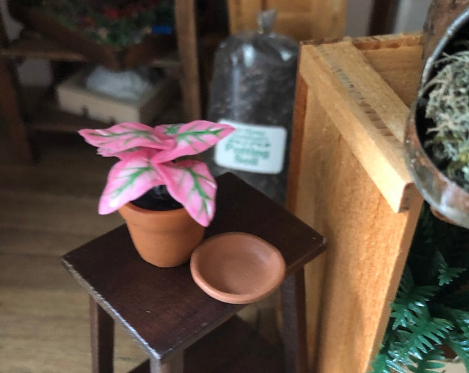 Miniature Caladium, Mini Plant in Clay Flower Pot With Removable Saucer, Dollhouse Miniature, 1:12 Scale, Dollhouse Decor, Accessory
