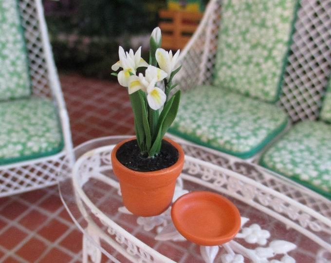 Miniature Iris, Mini White Iris In Clay Flower Pot With Drip Saucer, Style #53, Dollhouse Miniature, 1:12 Scale, Mini Flower Plant