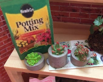 Miniature Cactus, Succulents, Set of 3, Mini Plants in Flower Pots, Dollhouse Miniatures, 1:12 Scale, Accessory, Home and Garden Decor