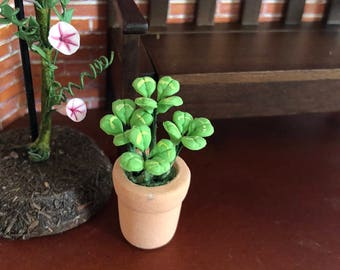 Mini Flowers & Plants