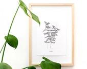 Botanical Wall Art, Mint Print, Botanical Illustration, Kitchen Herb, Herbs Print, Kitchen Decor, Herbs Wall Art, Herbs Decor, Urban Jungle