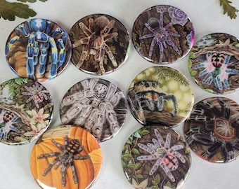 Tarantula Button Lot of 10 - 1.75 inch Hand Pressed Metal Buttons Featuring Original Artwork T. Seladonia Spider Gift