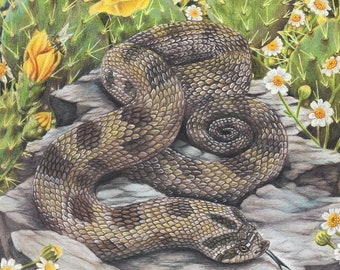Spring Time Hognose - Fine Art Print - By Laura Airey Le - Hognose Reptile Art Flowers Cactus Bees Insect Bloom Summer