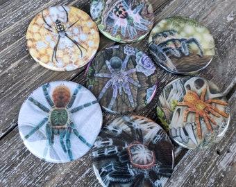 Tarantula MAGNET Lot of 7 - 1.75 inch Hand Pressed Metal Magnets Featuring Original Artwork T. Seladonia Spider Gift