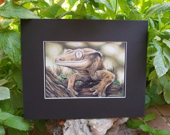 Crested Gecko - 5 x 7 Fine Art Print Matted in an 8X10 Black Mat - By Laura Airey Le - Reptile Art