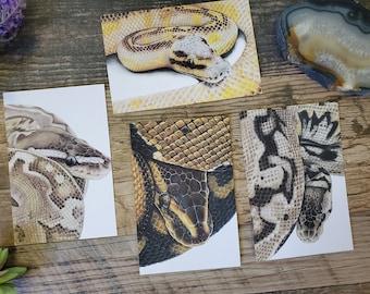 Four Ball Python Art Post Cards - Ball Python Morph Reptile Snake Lizard Art Postcards
