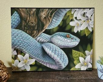 Blue Insularis - LIMITED EDITION 11x14 Fine Art Print - By Laura Airey Le - Viper Venomus Reptile Art Flowers Jasmine Asian Tea Wildlife