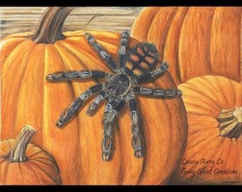 Autumn Tarantula - Fine Art Print - By Laura Airey Le - P. irminia Halloween Pumpkin Arachnid Bug Animal Holiday Harvest Fall