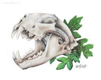 Mountain Lion Skull - Fine Art Drawing Print - By Laura Airey Le - Big Cat Oak Plant Botany Animal Skeleton