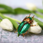 Green Scarabaeus Bug Brooch, Sequin Scarab Pin, Emerald Bronze Sequins, Sequin Felt Embroidery, Sacral Scarab Insect, Egypt Mystic Creature