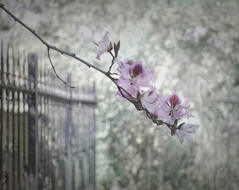 Fence with Flowering Branch - Jerusalem Hills - Fine Art Photograph