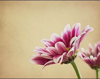 Purple and white flower photograph - Flowers are the music of the ground - 5x7 Fine Art Photograph
