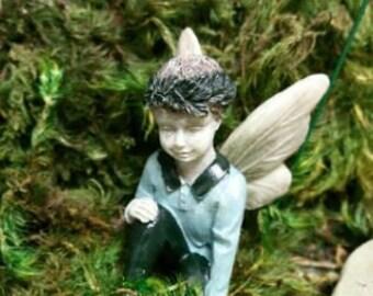 Fairy Clark Blue for the Fairy Garden