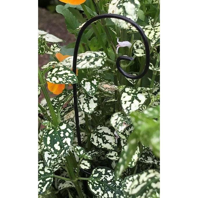 plain shepherds hook black metal 525 tall x 15 wide for the fairy garden plants not included - Fairy Garden Plants