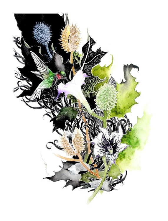 Datura -  PRINT of original watercolor