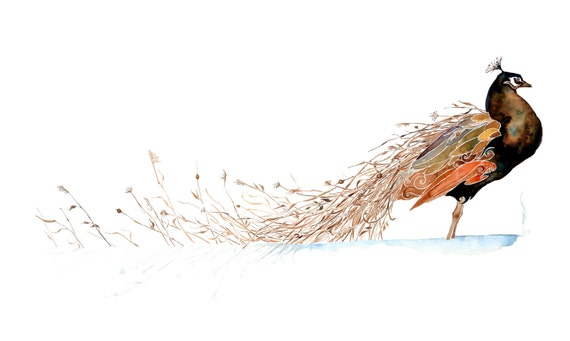 Winter Plumage-giclee PRINT of original watercolor painting -