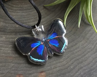 Blue Red Butterfly, Callicore kolyma necklace, Cruelty free specimen