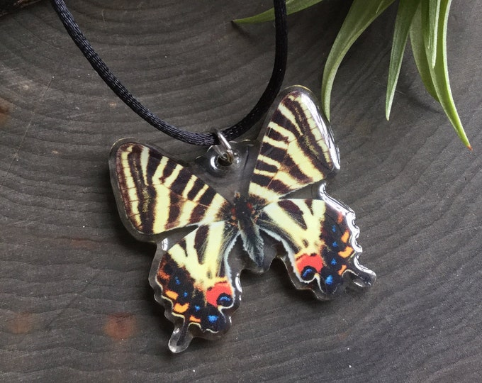 Japanese Luehdorfia Butterfly necklace, Cruelty free specimen