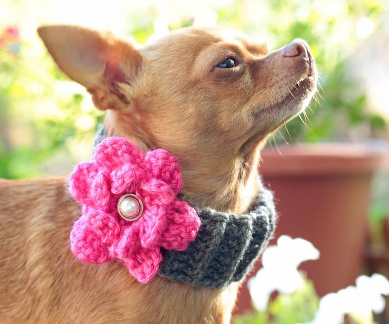 crochet dog cowl scarf  pattern with flower  / pdf /digital / image 0
