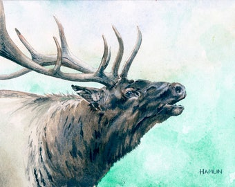 aeb9ea412 Bull Elk Study - Open edition print of an original watercolor (fits 11x14  frame)